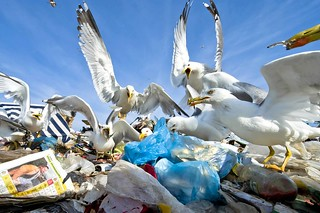 130 - Seagulls feeding place | by European Environment Agency (EEA)