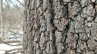 Tree bark, Forest Park, Queens - LG G5 | by Andy_Holly