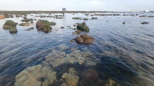 Living reefs of Terumbu Pempang Tengah