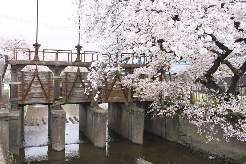 埼玉県川越市に残る昭和13年(1938年)に作られた木製の堰がある田谷橋 ...
