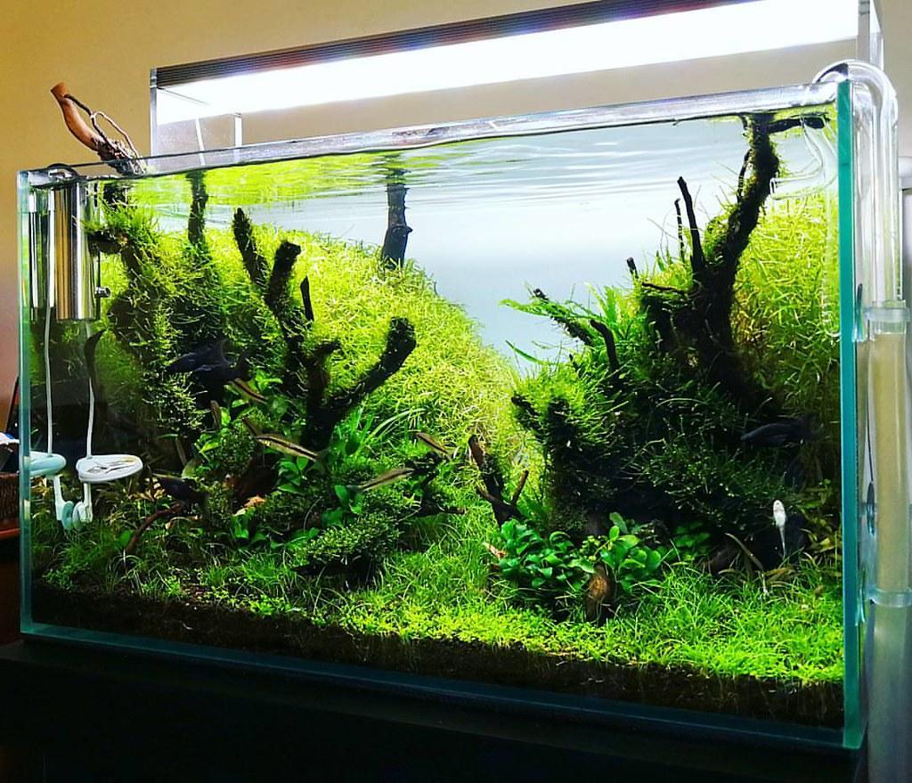 Aquascaping Magazine: Before And After Freshwater Aquascape Aquarium T