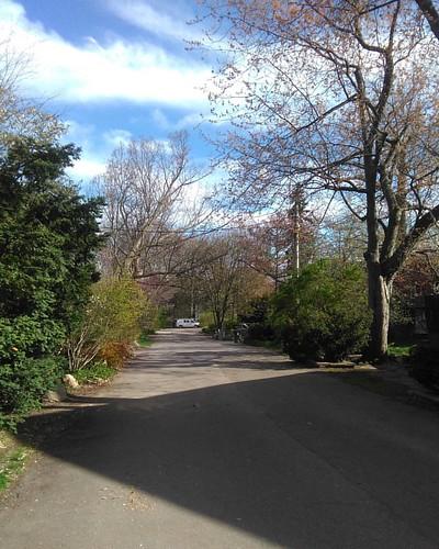 Down the street #toronto #wychwoodpark #latergram #streets