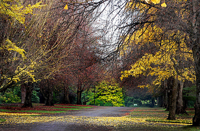 Hagley Park. Christchurch  New Zealand.