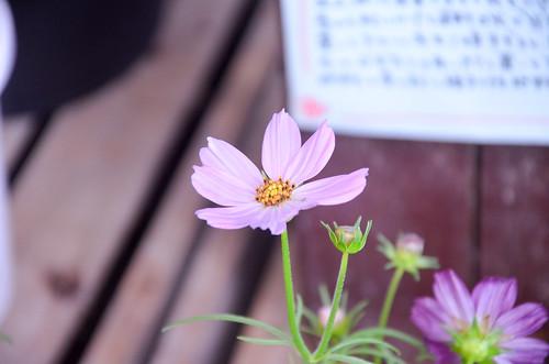 20131013-DSC_4673-002