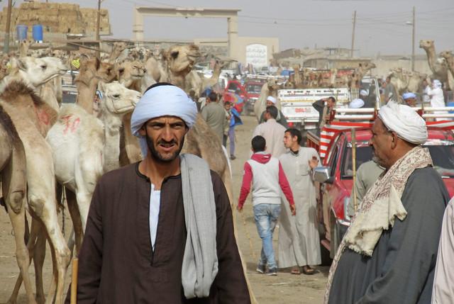 CamelMarket1-13