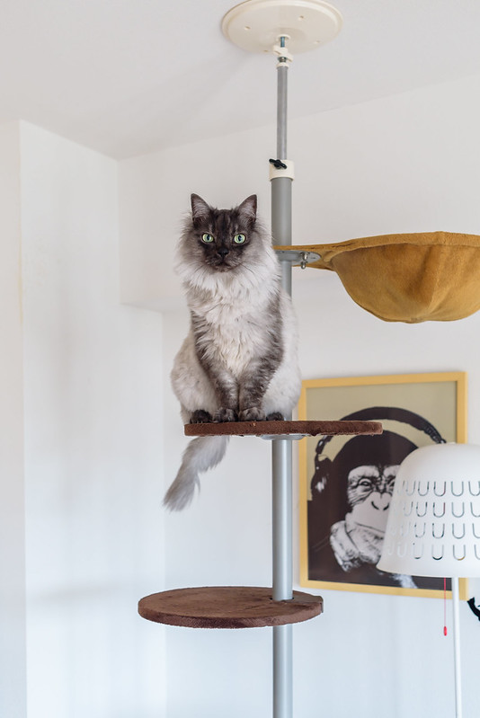 Cat on the Pole