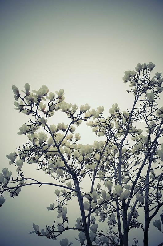 乳白色の空と花