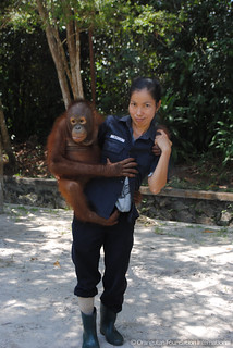 Orangutan Foundation International Ibu Evi & Howard Insects of the Forest Part 1 Caterpillars