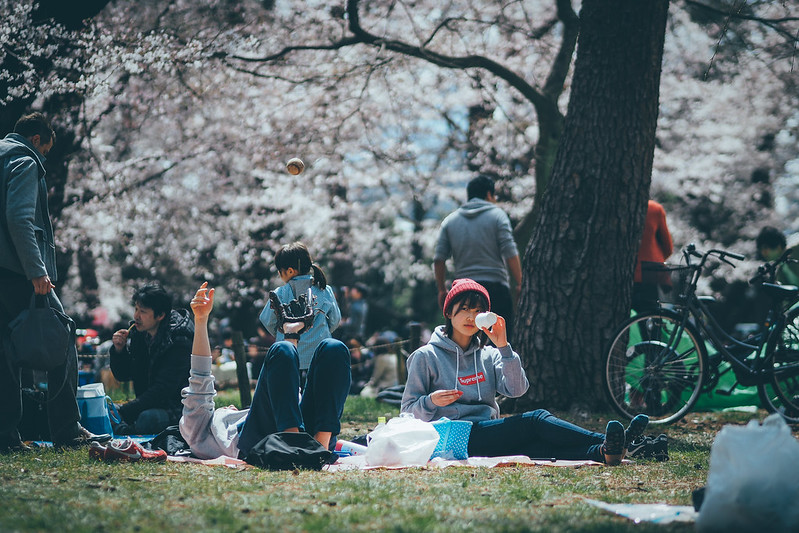 櫻花開春天來|埼玉 大宮公園