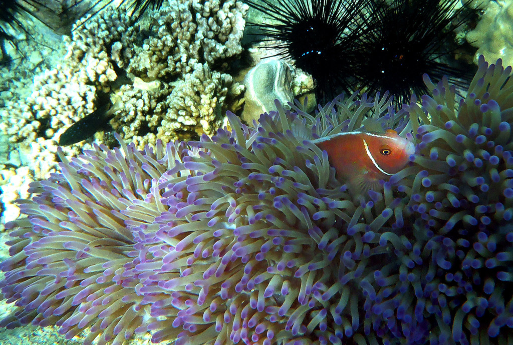 Koh Chang - Snorkeling