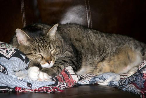 Benton Cat And Dog Shelter Minny
