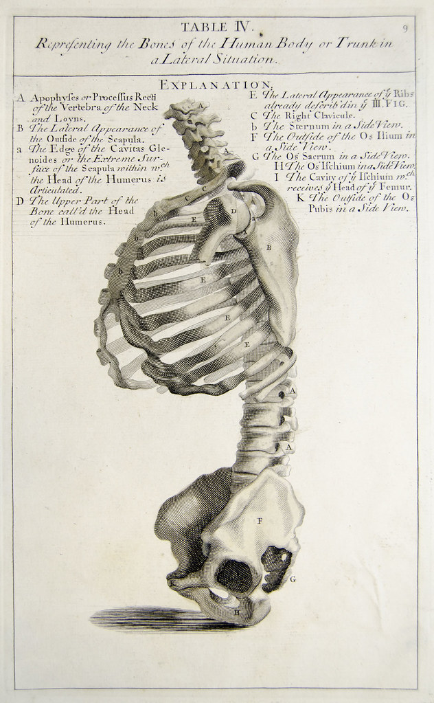 Side View Of The Bones Of The Torso Plate 4 Showing Engrav Flickr