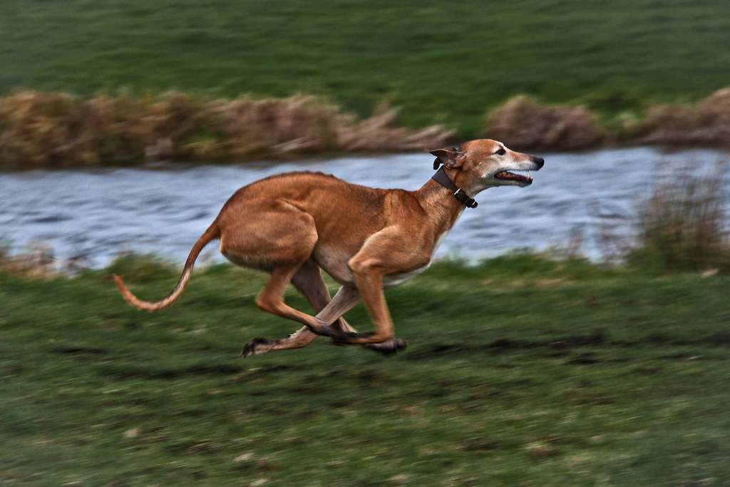52 Weeks For Dogs 48 52 Full Throttle By Menthedogs