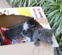 gatitos tirados en contenedor