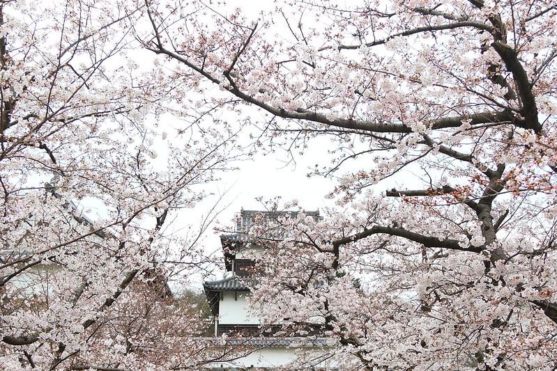 福岡城跡|舞鶴公園