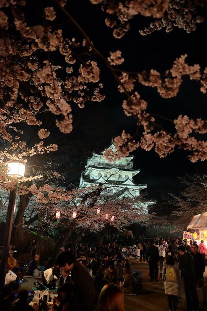 Inohanayama sakura matsuri