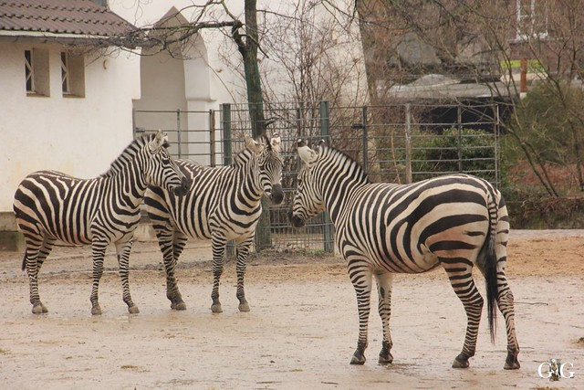 Besuch Zoo Berlin 26.02.201724