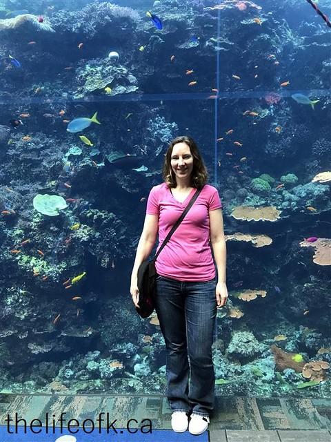 Atlanta_Aquarium1