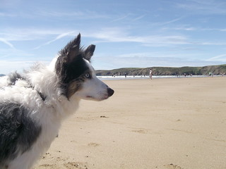 Dog Friendly Beach, Newgale, Pembrokeshire | by Goodwinsplace