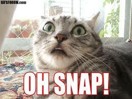 oh snap cat www techagesite com wallpaper man flickr