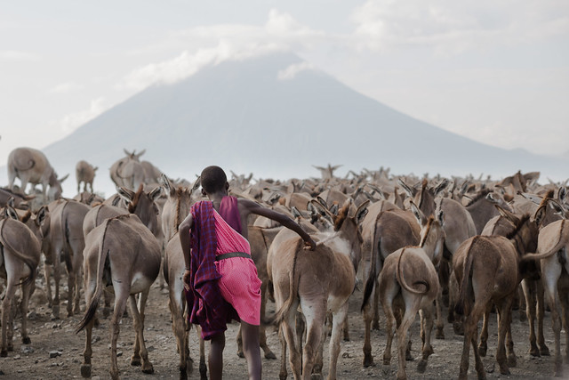 Young Maasai tribe herder