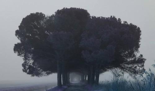 La porta della nebbia