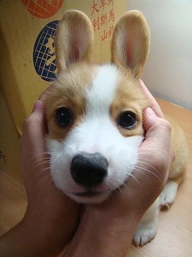 bunnydog
