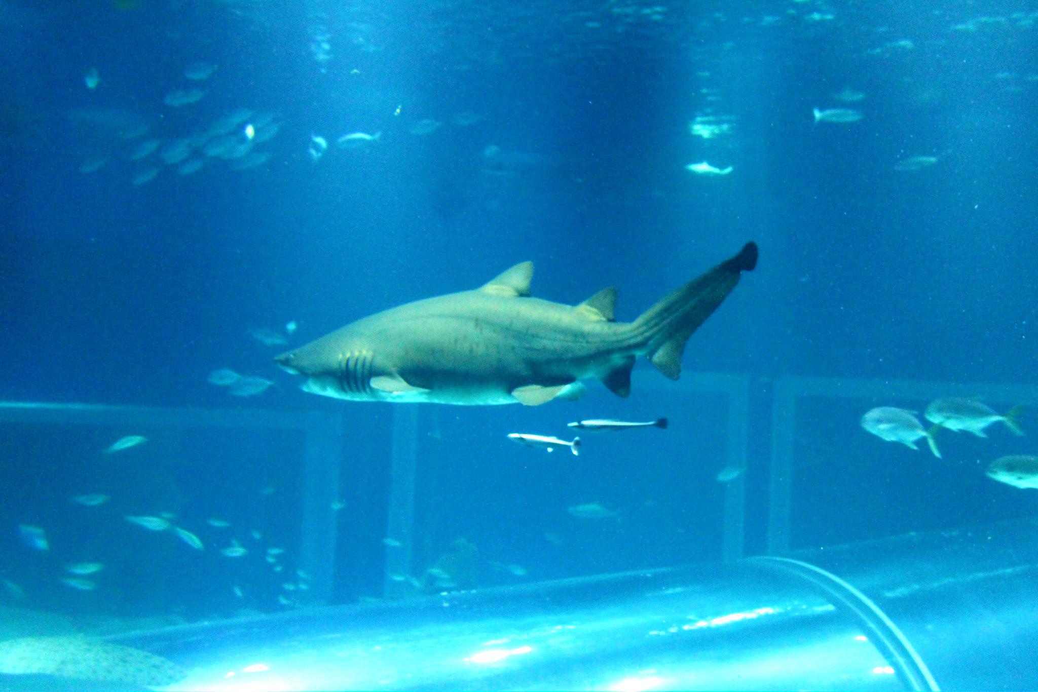 aquario12v2