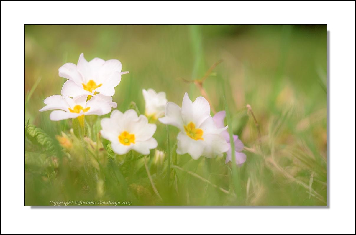 Bientôt le printemps? +2+1 33335268386_92d2c1d154_o