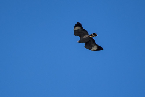 cuba.black hawk.5472