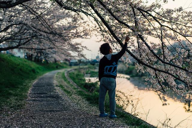 CherryBlossom_09