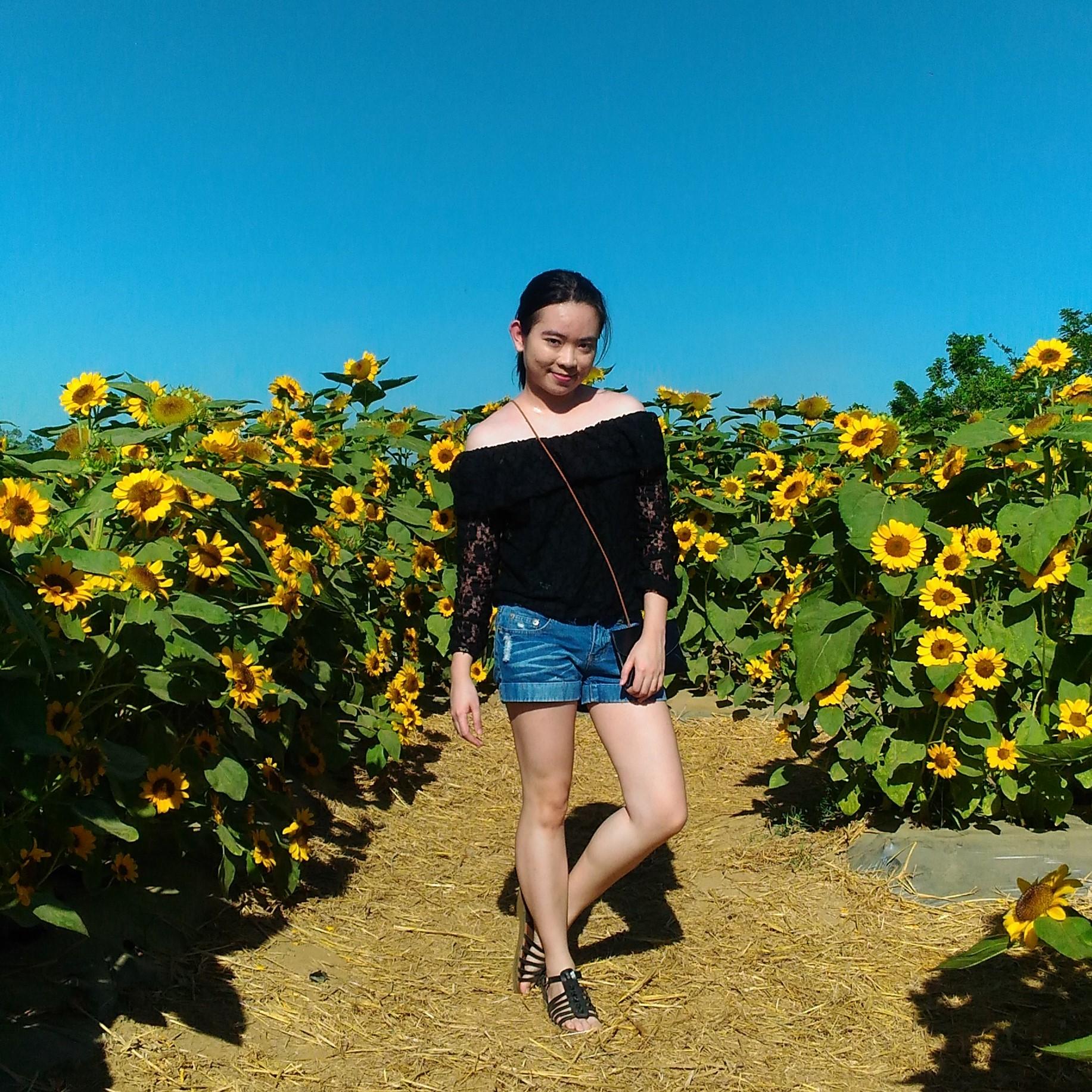 sunflower maze_2017_12