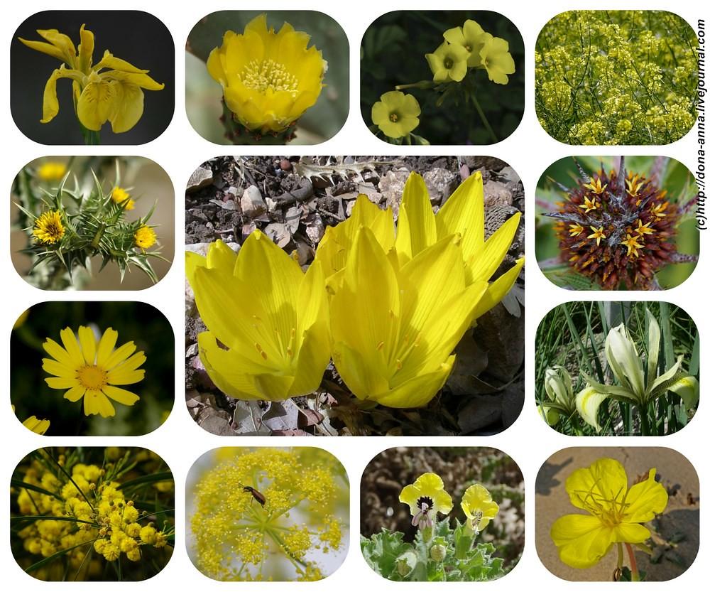 Луковичный желтый цветок