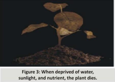 Neuro fig 3