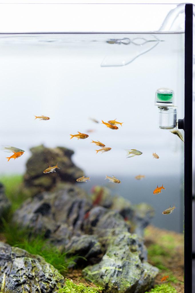 Tank 120l romanholba flickr for Aquarium 120l