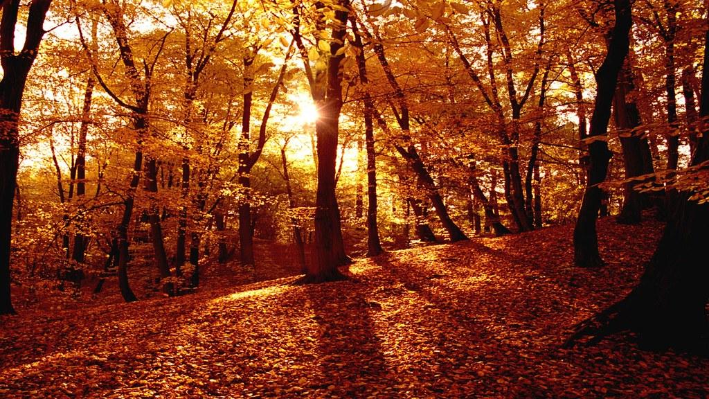 197995-jesen-slike-za-pozadinu-uma-nemre-bilivit-1280x720
