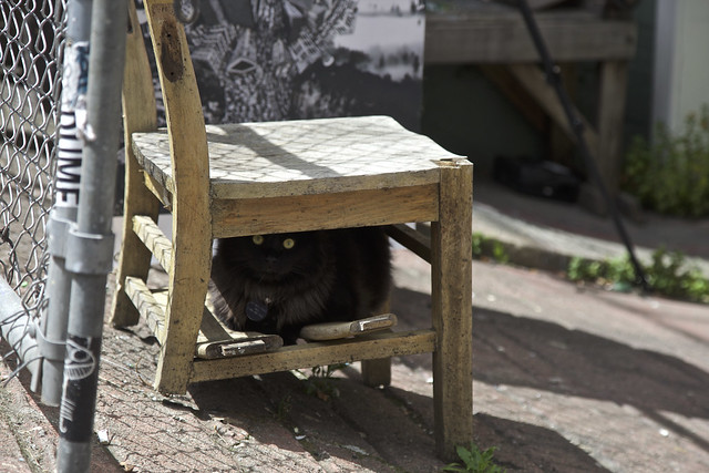 Cat Under a Warm Wooden Chair