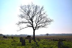 the Corpusty dead