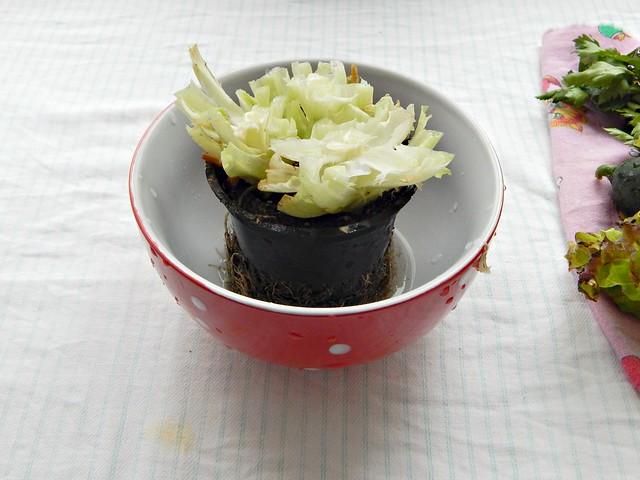 салат - срезано