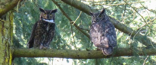 M&P_OWL_462017