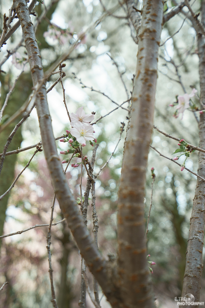 Blossom Bliss - 012