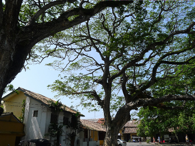 304-Galle