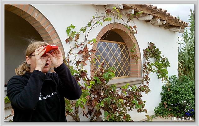 Uvas y Vino haciendo turismo del Vino 6