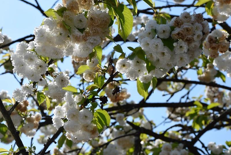 Rowan Tree 12.04 (4)