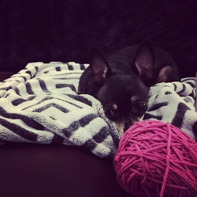 💖 #HeyJellyGirl #knittersofinstagram