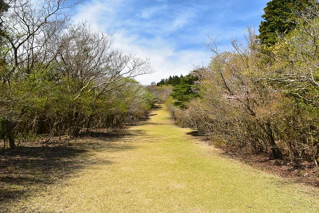 達磨山 芝生の登山道