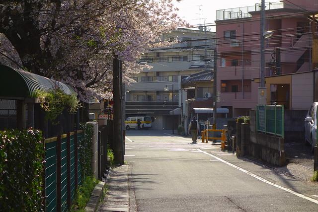 2017/04 叡山電車修学院2号踏切辺りの桜