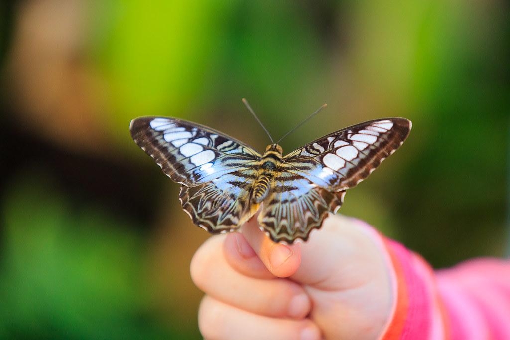Butterfly Jardin Hamel Papillon 3 Stephan Reno Flickr