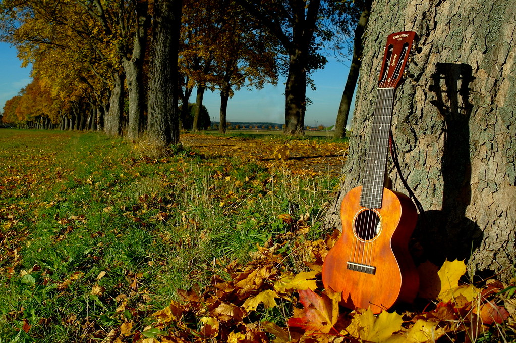 Ukulele Background Autumn Avenue with gui...