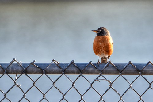 ON THE FENCE | by Lisa Plymell